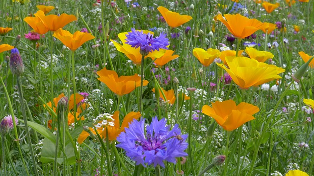 flower meadow, flowers, summer flowers, color, nature