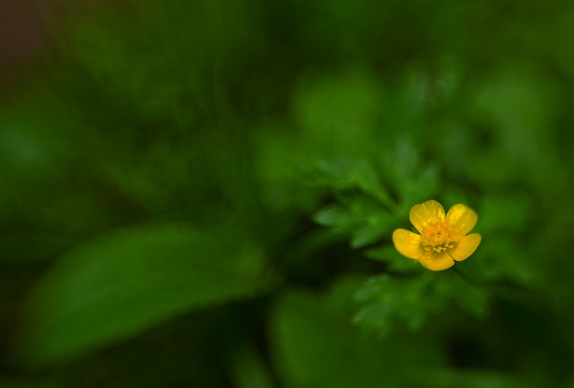 flower, nature, lensbaby