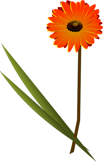 flower, orange, daisy, plant, nature