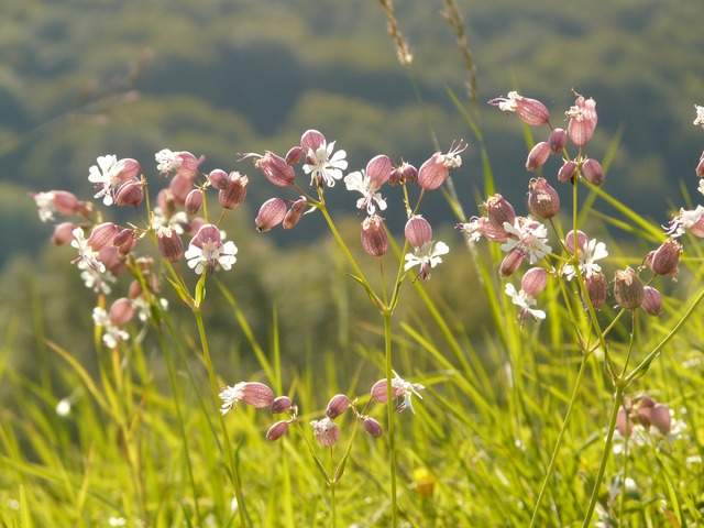 flower, plant, meadow, grass, bloom, nature, idyll