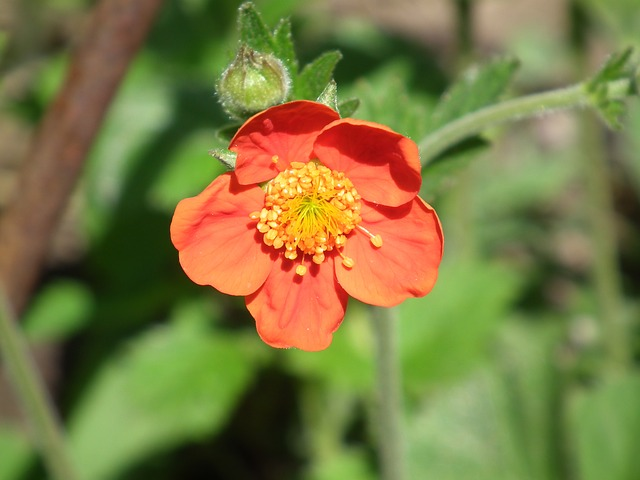 flower, red, orange, flowers, decorative
