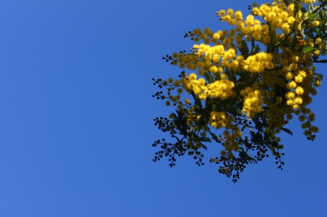 flower, sky, flowers, spring, nature, flowering, yellow