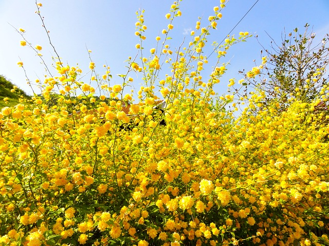 flower, yellow, bush, bloom, road, branch