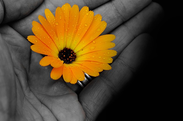 flowers, flower, plants, nature, hand, light, effects