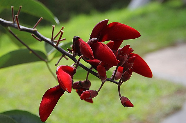 flowers, red flower, nature, garden flower