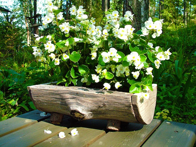 flowers, white, flower, plant, in the garden, potted