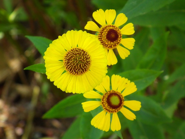 flowers, yellow flowers, flower, rudbeckia, yellow