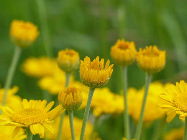 flowers, yellow, wild flowers, wild plant