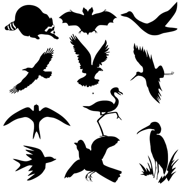 flying, bird, icon, flock, black, graphic, pattern