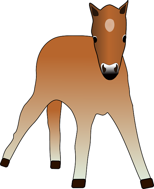 foal, animal, colt, cup, horse, pony, young