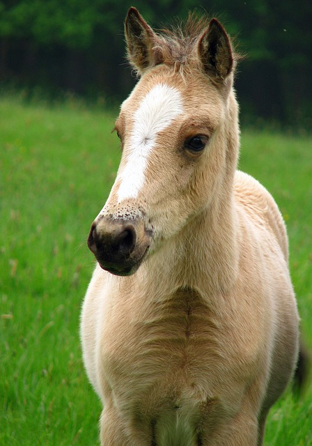 foal, horse, pony, baby horse, young, colt