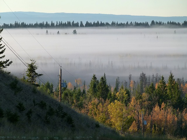 fog bank, early morning fog, scenery, landscape, forest