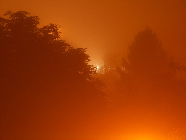 fog, forest, foggy, night, weather, nature