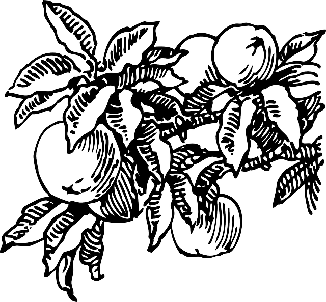 food, fruit, outline, plants, tree, branch, peach, vine