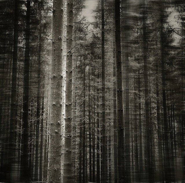 forest, tree, black white, black and white