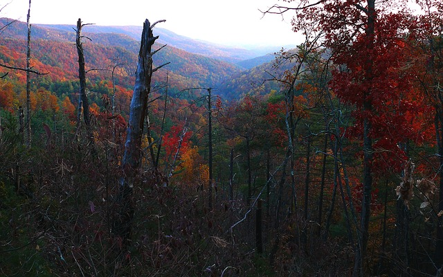 forest, trees, fall, autumn, seasons, valley, beautiful