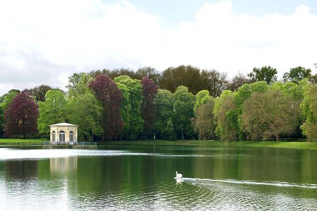 france, lake, water, swan, bird, forest, trees, woods