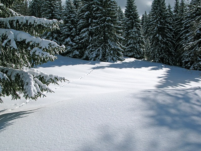 france, winter, snow, ice, forest, trees, woods, nature