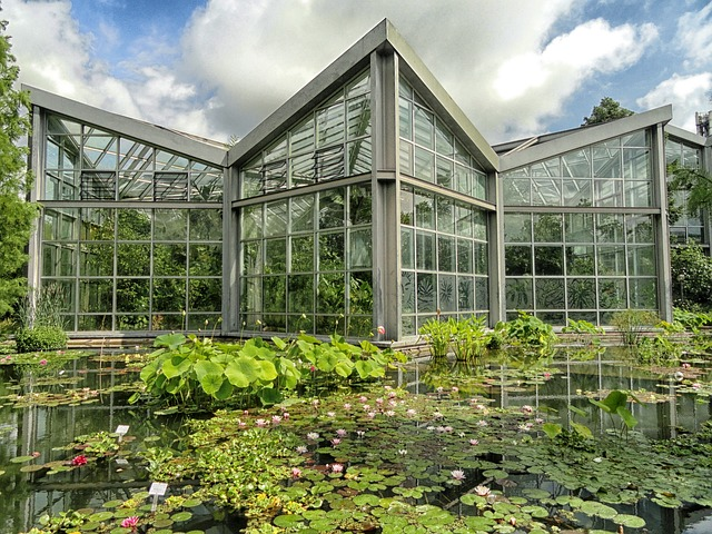 frankfurt, germany, botanical garden, pond, water