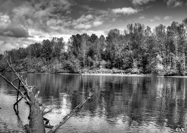 fraser, river, black, white, landscape, nature, trees