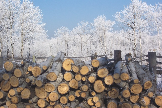 frost, ice, winter, cold, wood, firewood