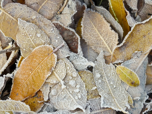 frosted, frozen, foliage, leaves, winter, wintry