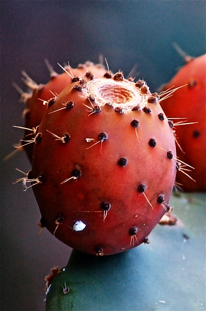 fruit, cactus, prickly pear cactus, vegetable, nature