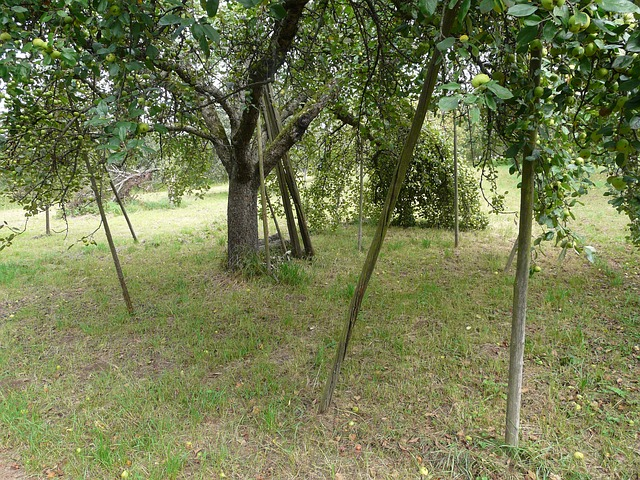 fruit tree, orchard, agriculture, support