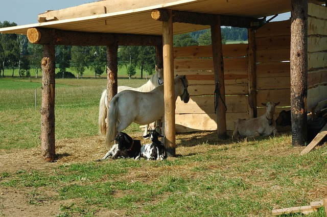 germany, stall, horses, goats, farm, rural, shed