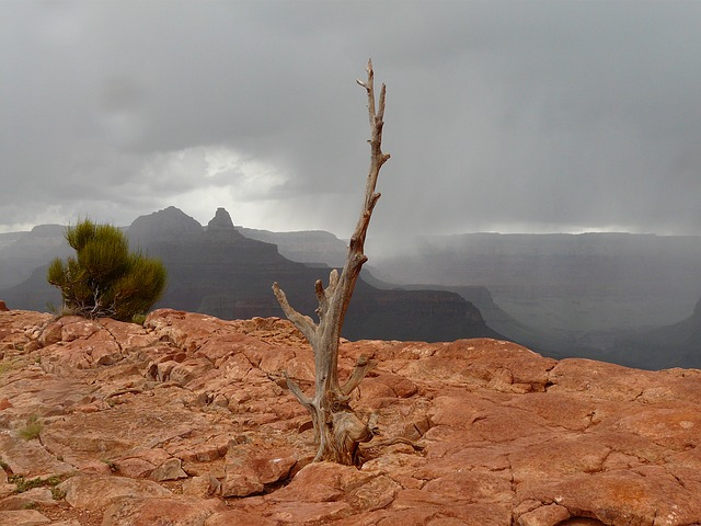 grand canyon, gorge, tree, thunderstorm, storm, rock