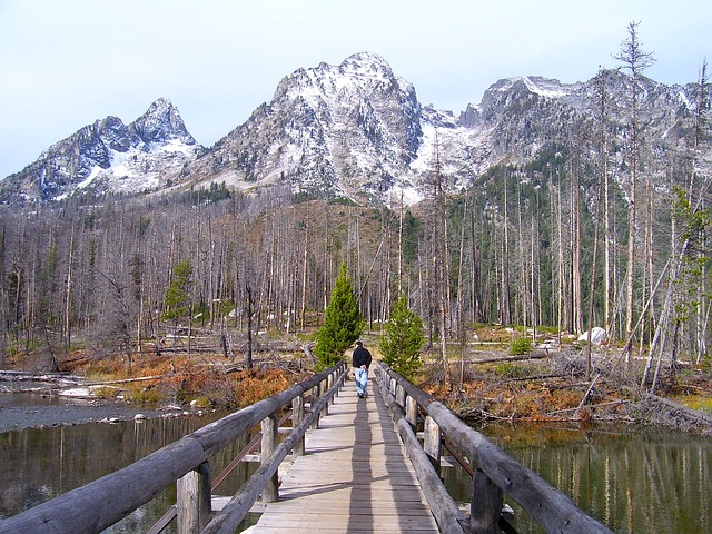grand teton national park, wyoming, bridge, wooden