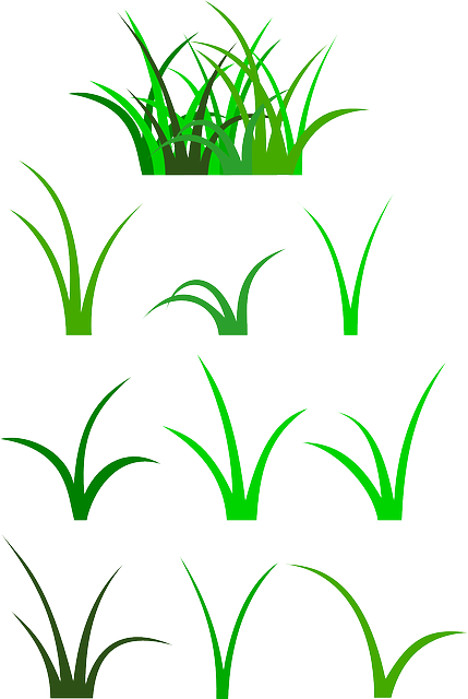 grass, green, plant, vegetation