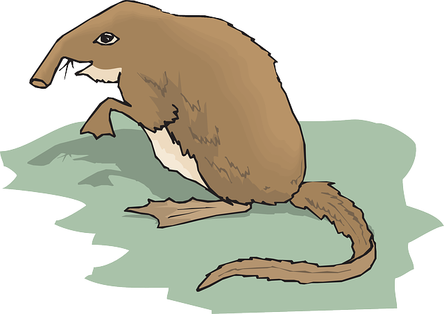 grass, long, standing, animal, tail, fur, shrew, nosed