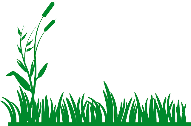 grass, plants, green