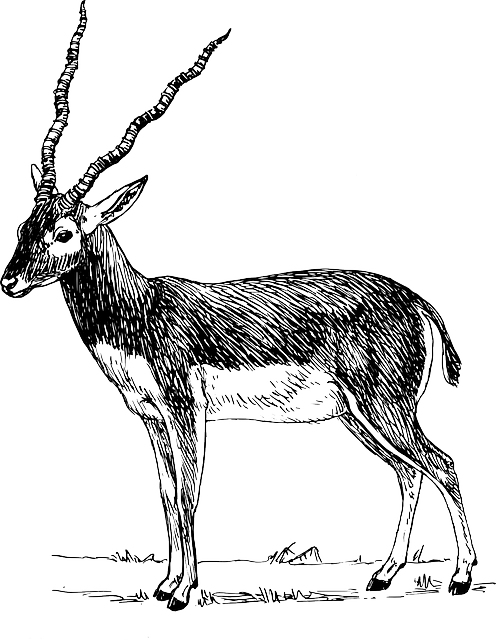 grass, standing, animal, antelope, fur, antlers