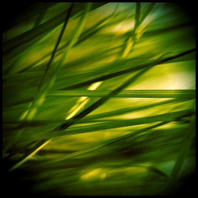 grass, stone, grasses, reed, plant, green, nature