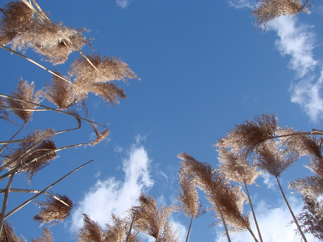 grass, tall, upward reaching, sky, spring, landscape