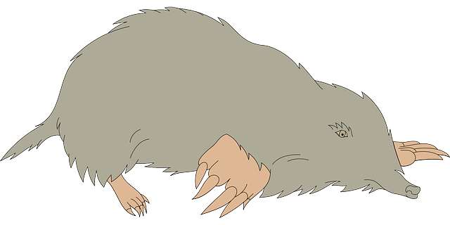 gray, hole, ground, animal, claws, blind, furry, mole