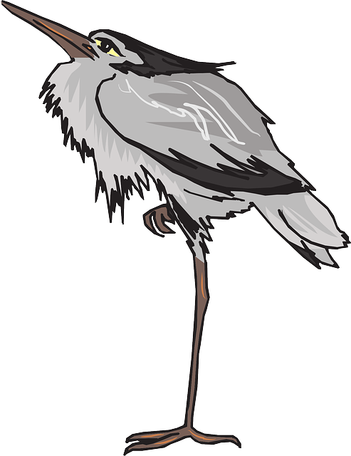 gray, one, bird, wings, long, leg, standing, animal