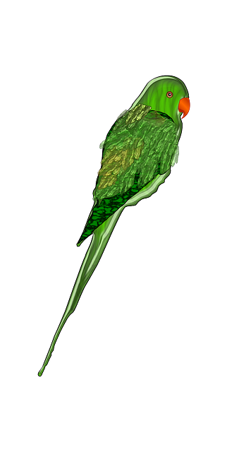 green, bird, wings, parrot, tail, feathers, perched