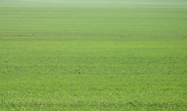 green, flat, agriculture