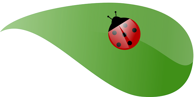 green, leaf, spring, ladybug, bug, summer, nature