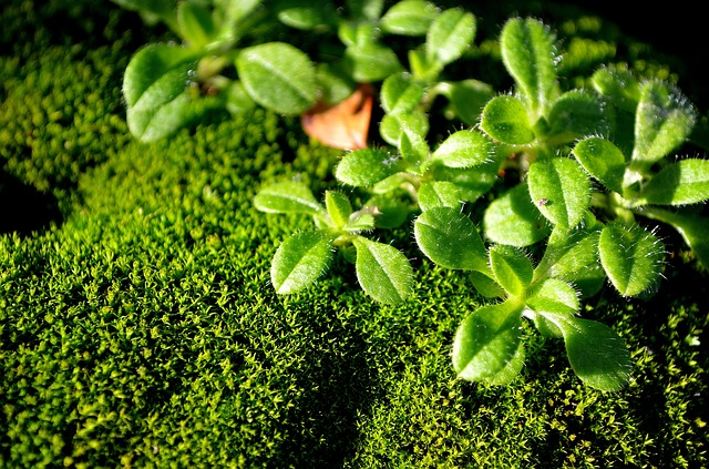 green, moss, macro, nature, background, plant