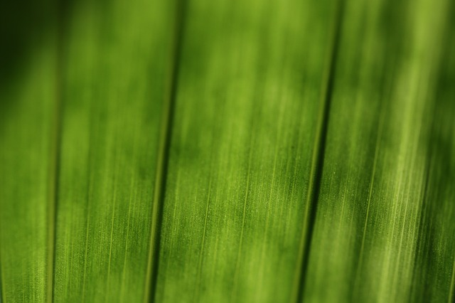 green, plant, journal, macro, structure, structures
