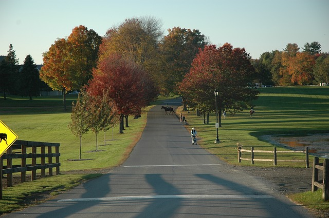 greenfield, massachusetts, landscape, campus, trees