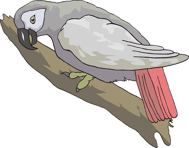 grey, african, wings, looking, parrot, feathers