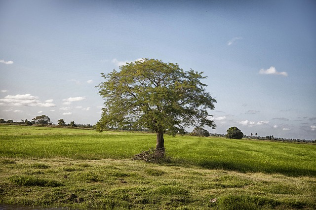guyana, landscape, sky, clouds, scenic, tree, trees