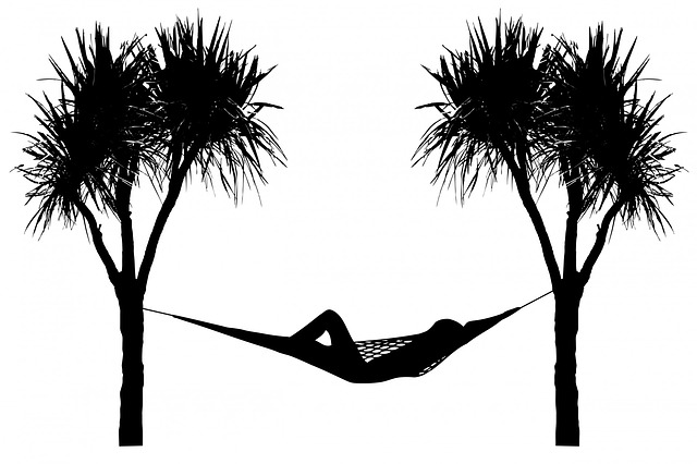 hammock, tree, trees, palm tree, palm trees, palm