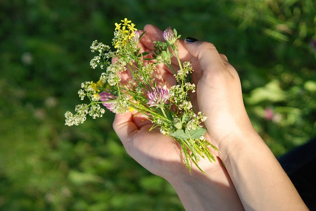 hand, hands, green, grass, leave, flower, nature, plant