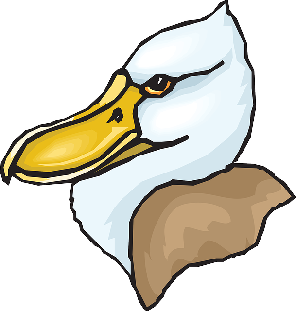 head, big, bird, duck, feathers, beaked, beak